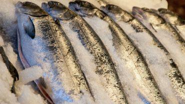 ikan mentah